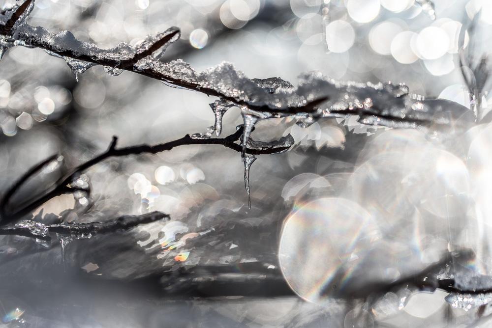 Forêt de Cristal - 9 -