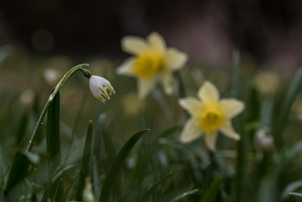 Fleurs de printemps - 4 -
