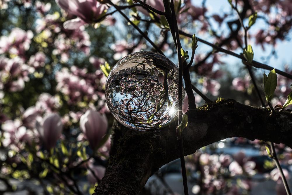 Magnolia - 4