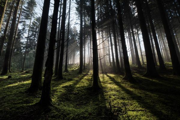 Forêt de brumes - 16