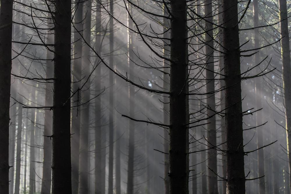 Vieilles branches - 2