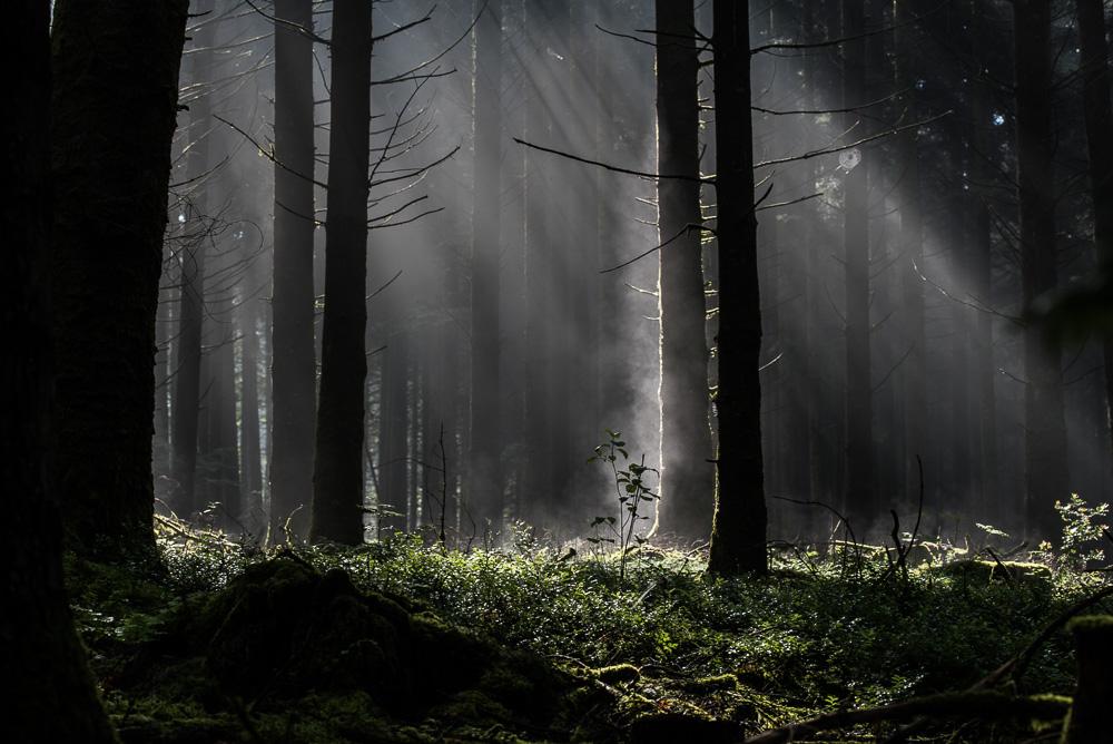 Forêt de brumes
