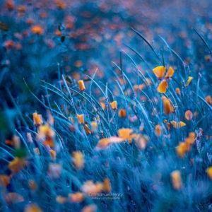 Exentricité florale