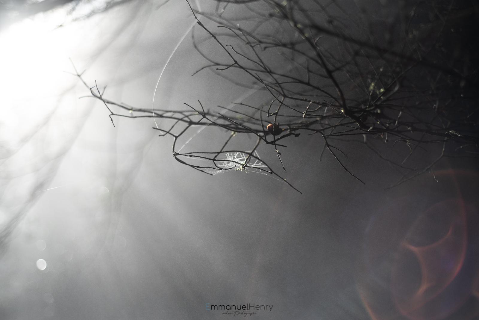 Entre Brumes et Lumière - 06