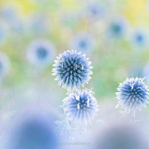 Soleils bleus